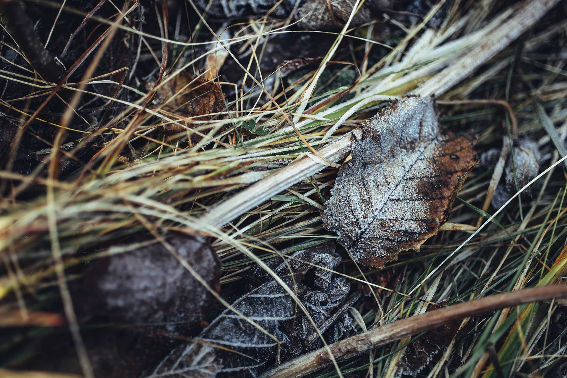 Detail Wald Boden Natur Fotograf Herbst Berge Berlin