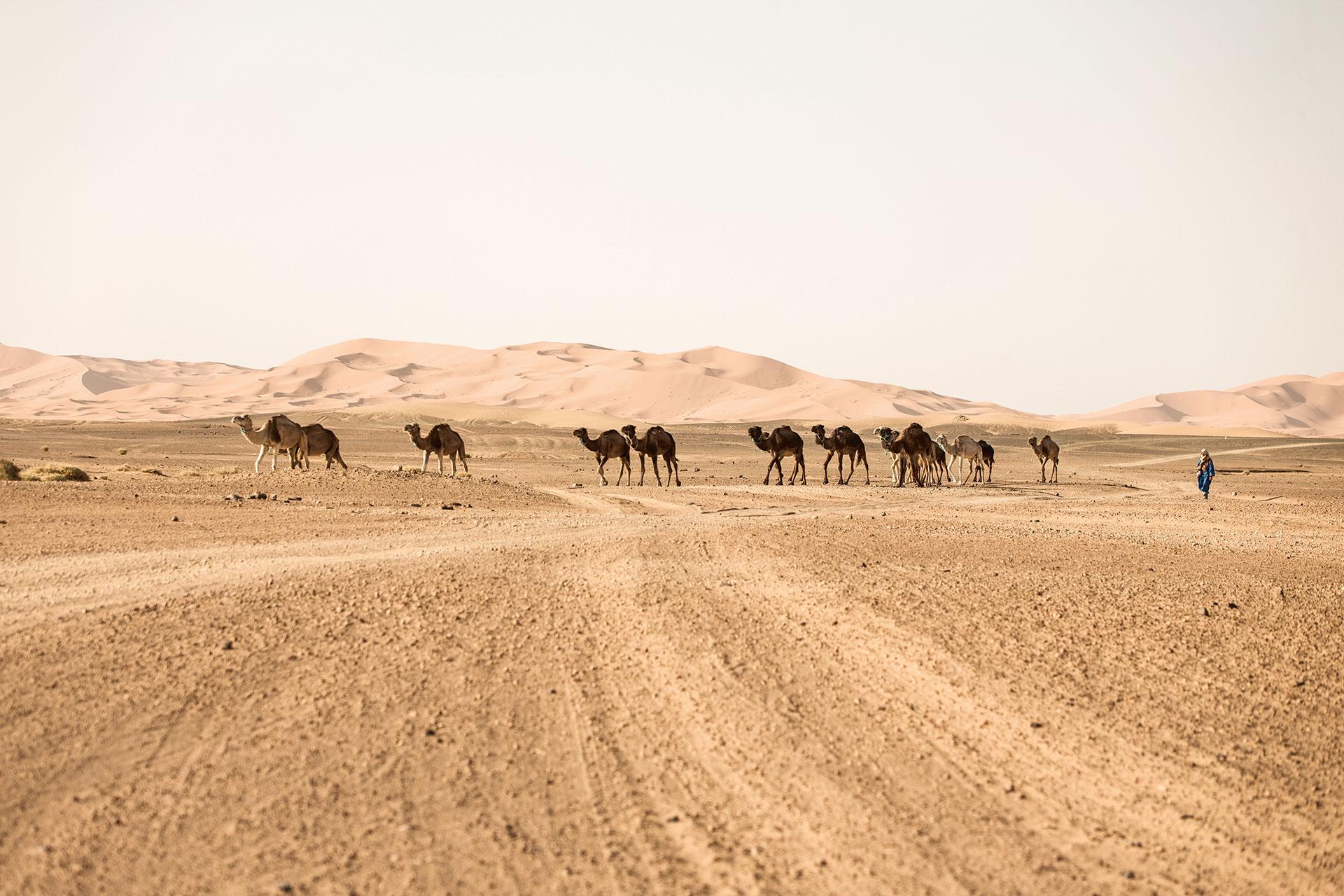 Reise Wüste Outdoor Landschaft Kamel Maloja Katalog Sahara Travel Michael Müller